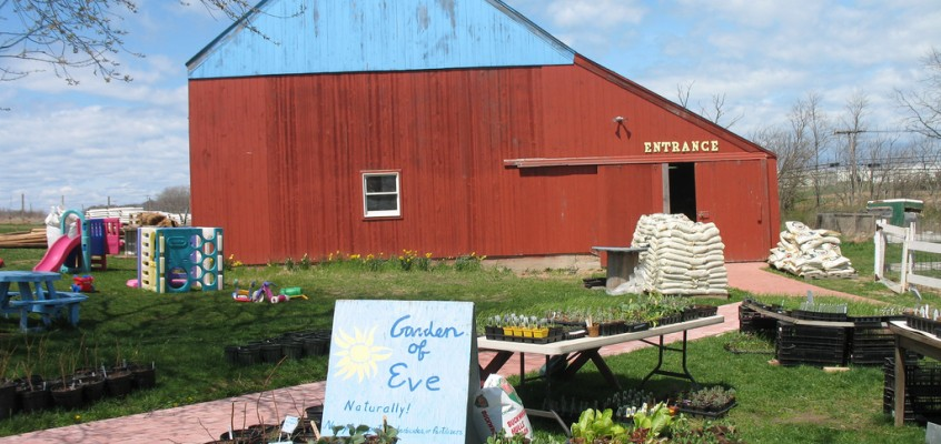 From Gardening to Farming: A Glimpse at Long Island's Garden of Eve Farm