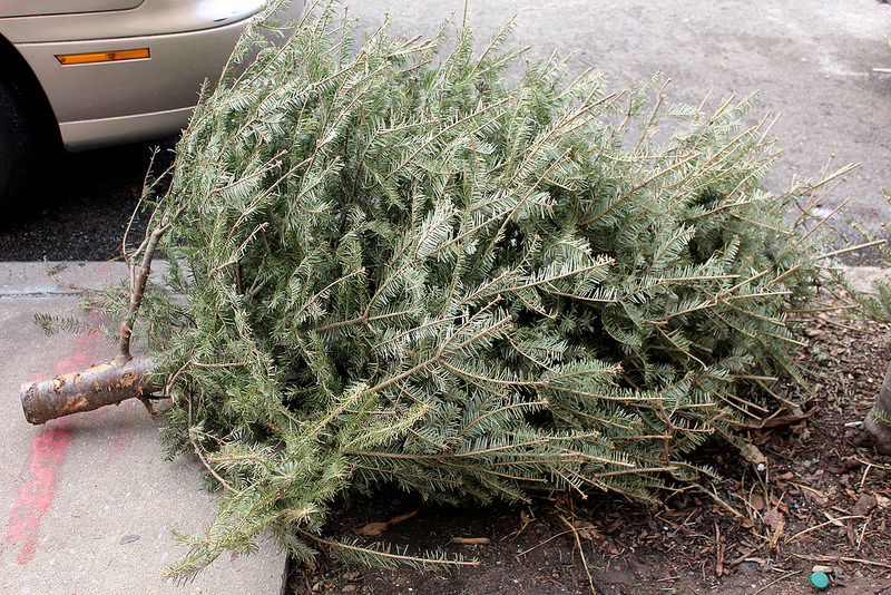We Are So Divorced From Nature Example 2: Spent Christmas Trees